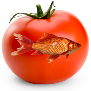 fish_tomato